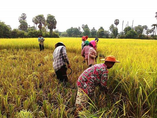 CAMBODGE Les consommateurs thaïlandais boudent les produits cambodgiens