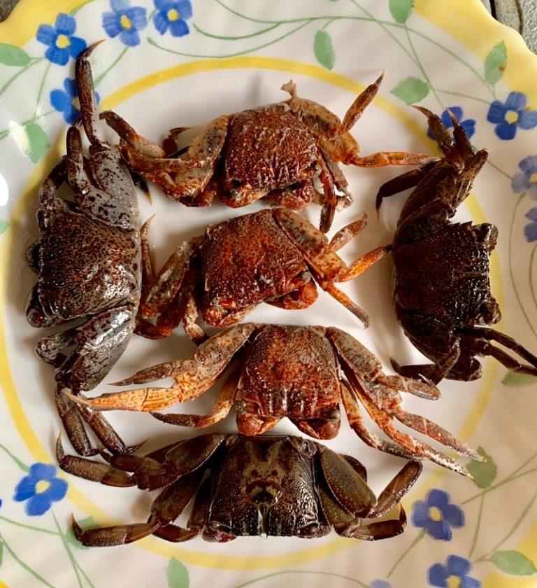 THAÏLANDE – CHRONIQUE : « Panier de crabes pour un Som Tam »