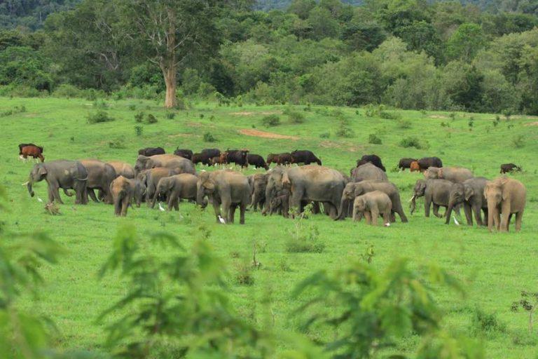 THAÏLANDE – TOURISME : L'absence de touristes profite…aux locataires des parcs animaliers thaïlandais